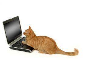 maddie-laptop