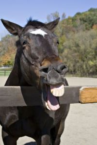 laughing-horse1