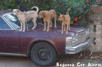 redneck_car_alarm