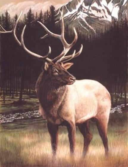 river-elk