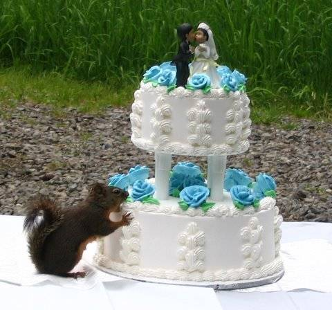 bride-groom-and-squirrel