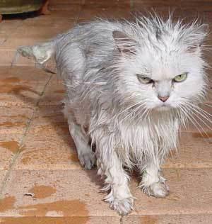 got-caught-in-rain