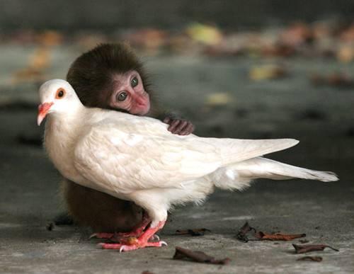 monkey-bird