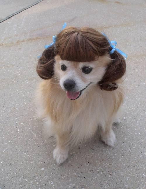 my-wig