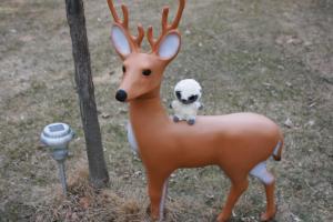 yoohoo-and-deer