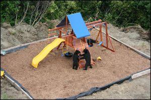bears and playground