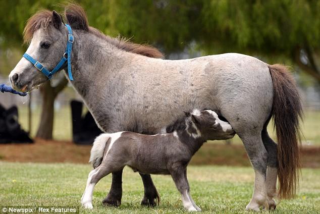 pony-and-momma
