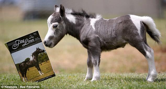 pony-reading