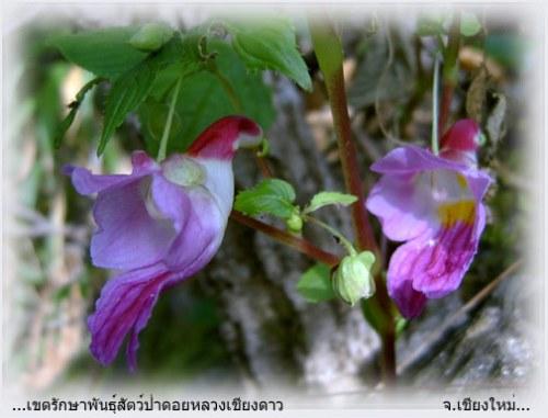 PARROT FLOWER2