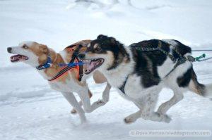 Run Huskies