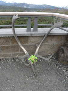 6d. Phin and Caribou Antlers