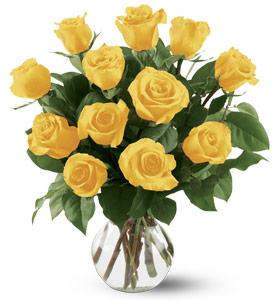 dozen-yellow-roses