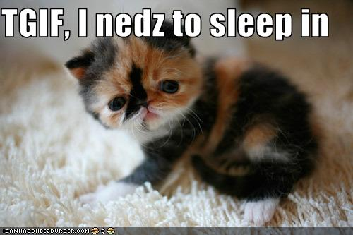 how to make a kitten go to sleep