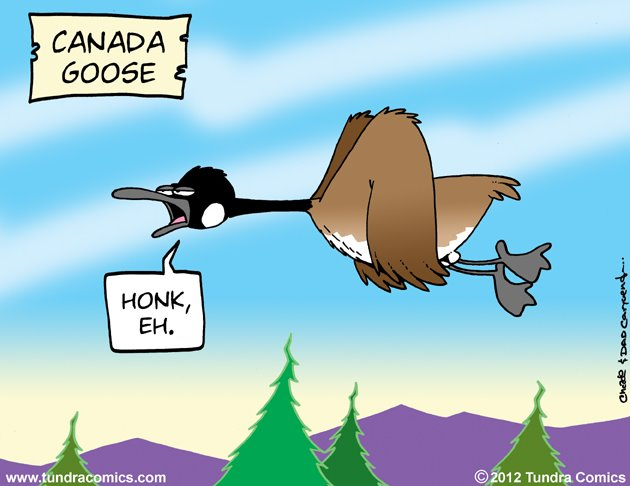 funny cartoon canadian goose